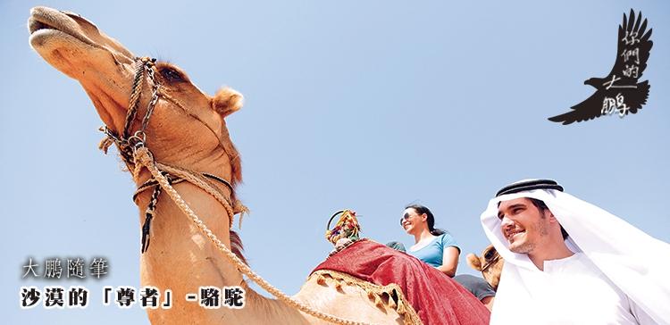 大鵬隨筆_沙漠的「尊者」-駱駝